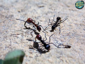 Realistic ants